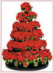 Poinsettia Tree Stands