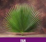 Fan Leaf Altar Decor Palms  (Bag Of 4)